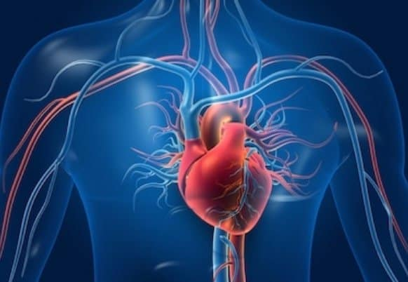 BENEFITS OF HEALTHY BLOOD CIRCULATION IN YOUR BODY