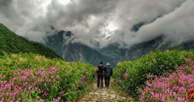 Valley-of-flowers
